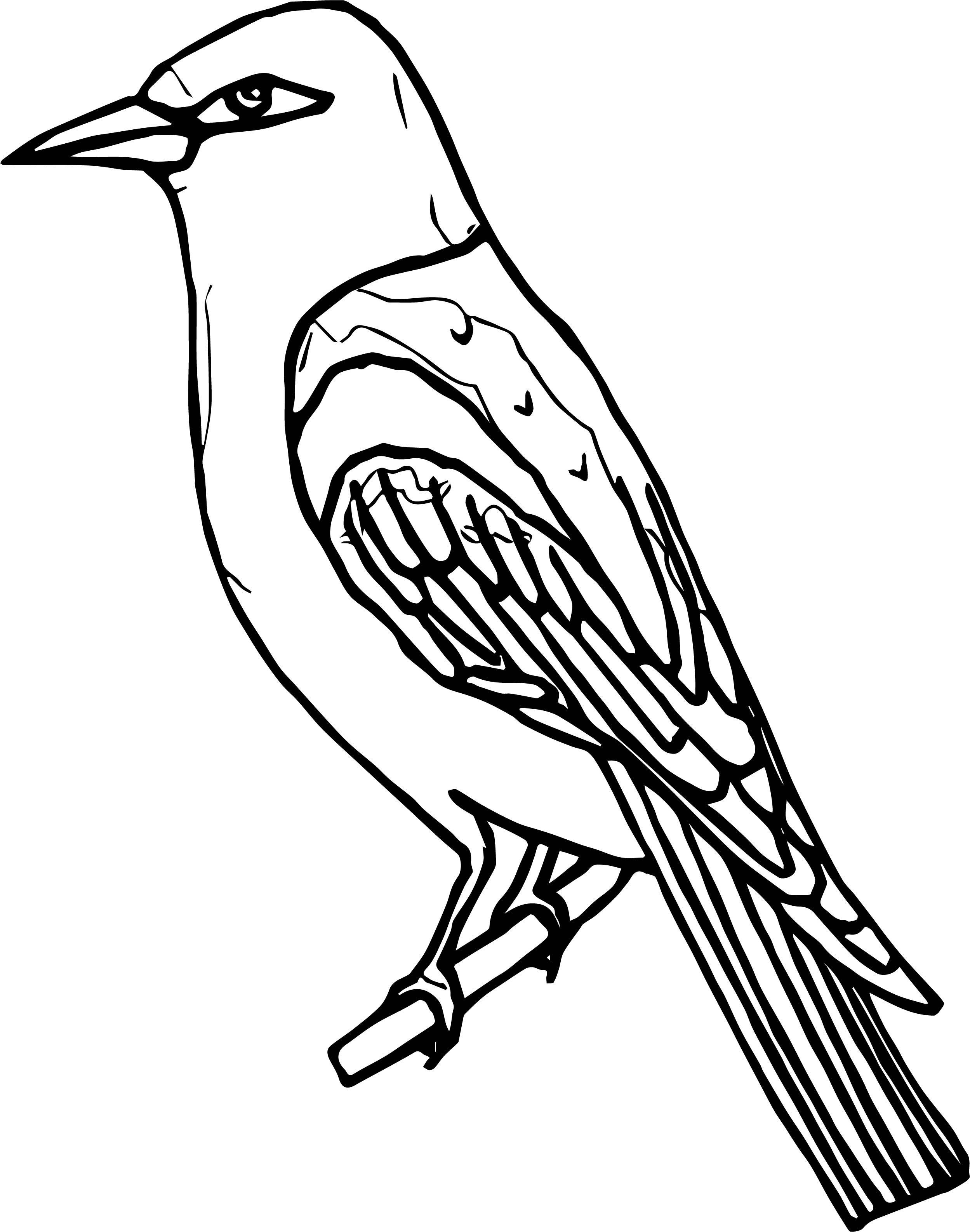 Have Bird Coloring Page