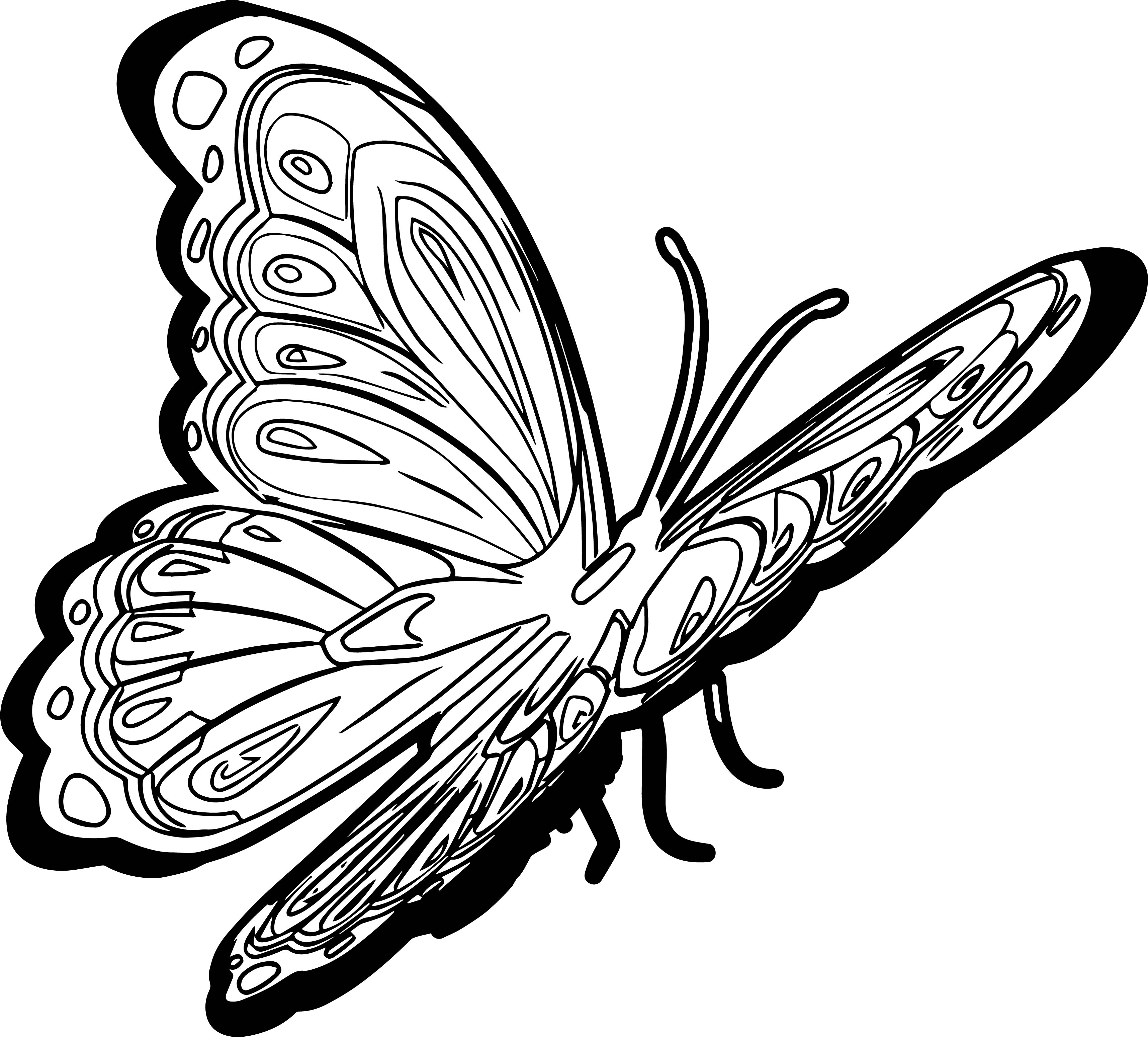 New Butterfly Picture Coloring Page