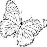 Up View Butterfly Coloring Page