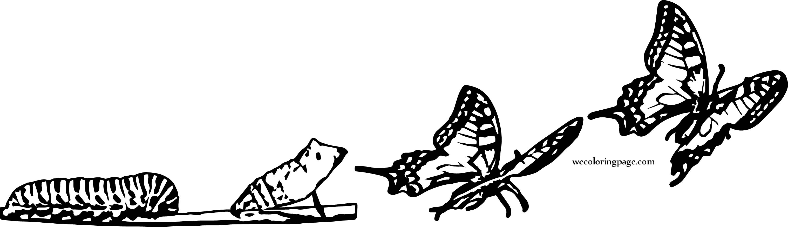 Butterfly Evolution Coloring Page