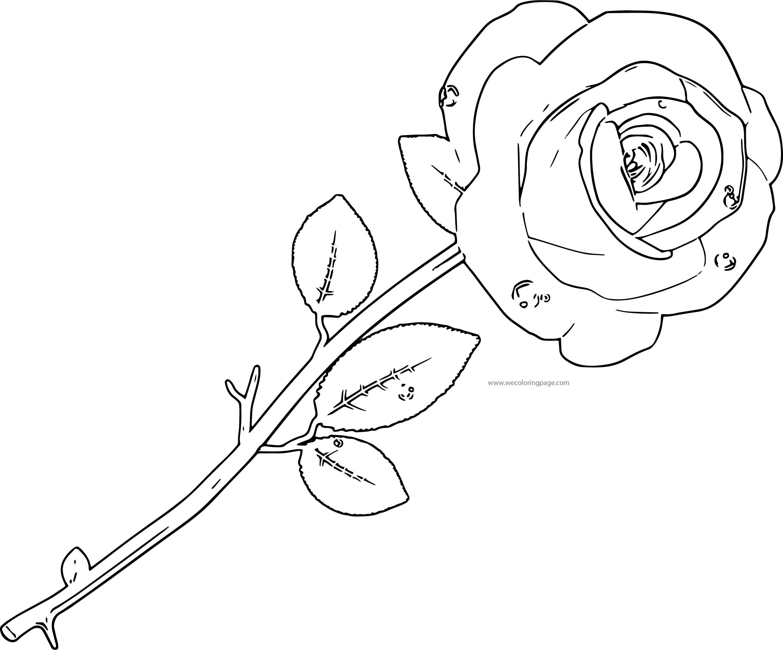 Red Rose Transparent Coloring Page