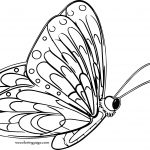 Side One Butterfly Coloring Page