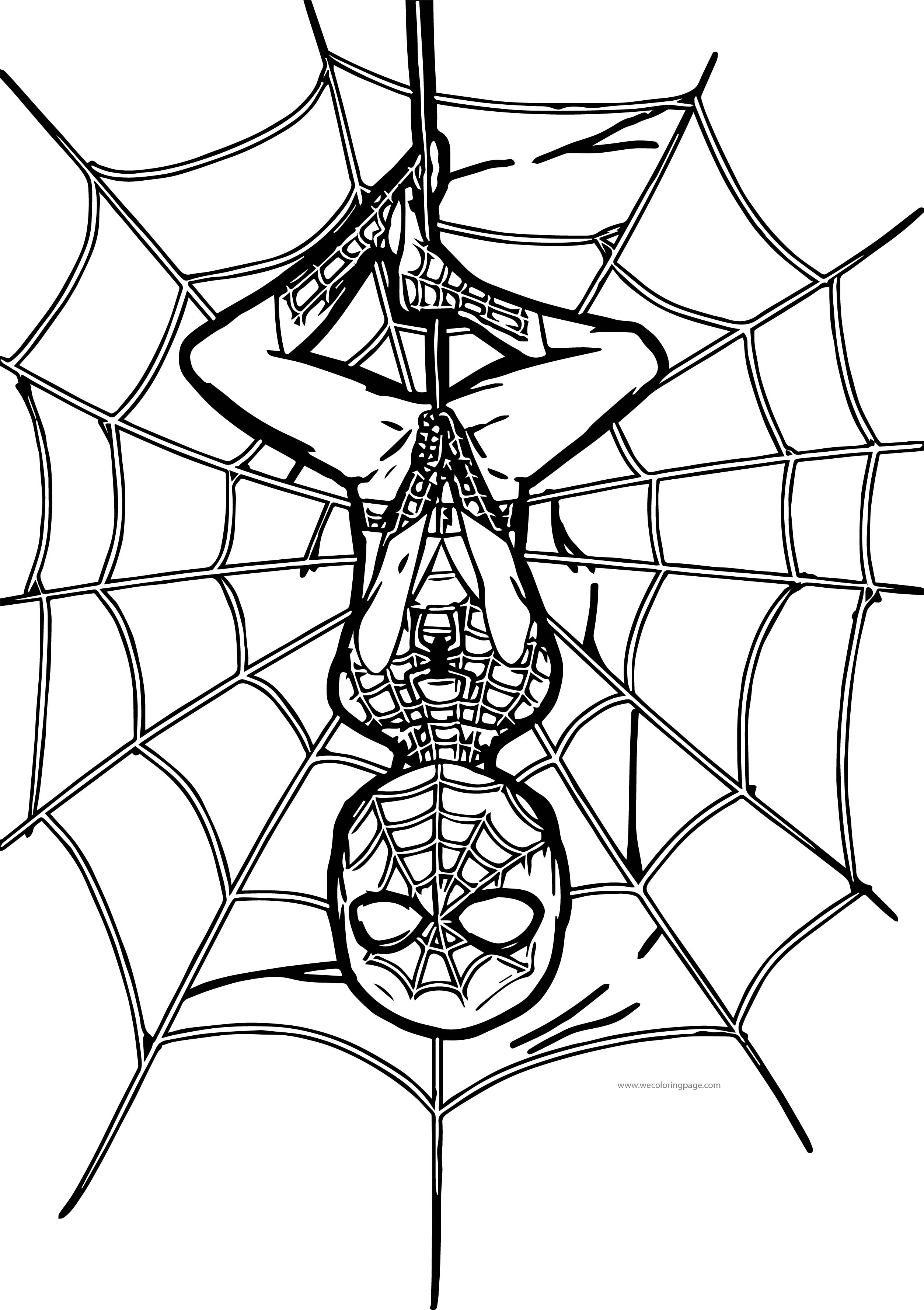 Spider Man On Net Coloring Page