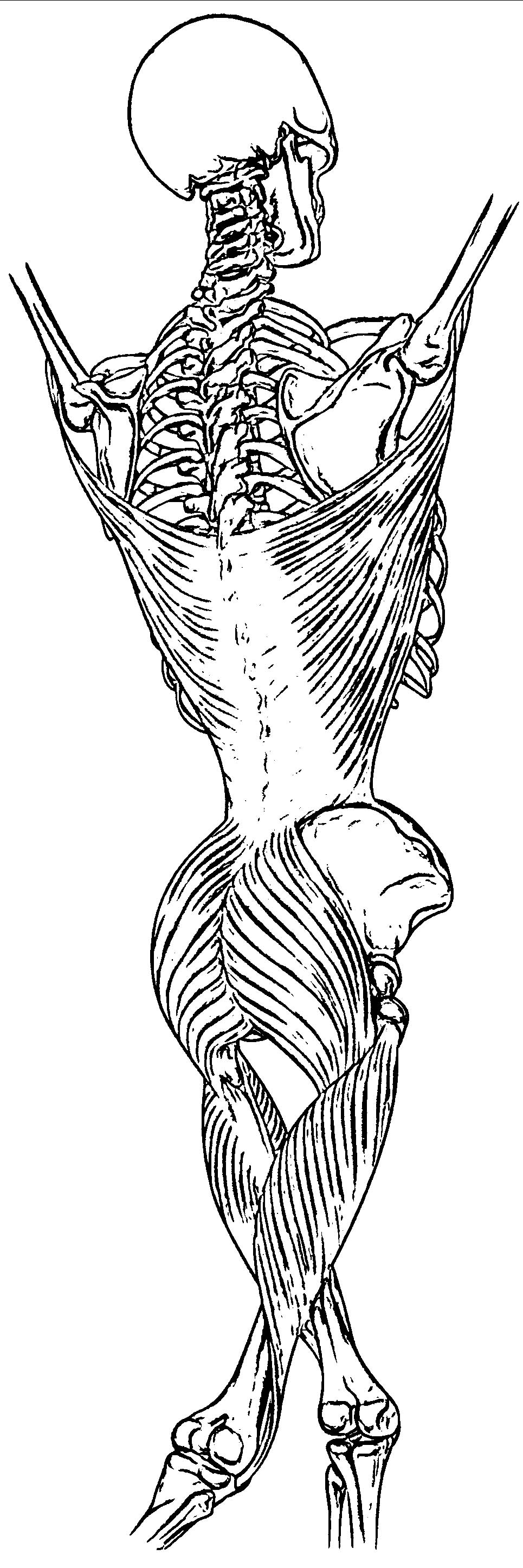 college anatomy coloring pages - photo#36