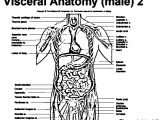 Anatomy And Physiology Blood Picture Sketch Anatomy Visceral Male Coloring Page