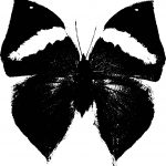 Black White Vintage Butterfly Coloring Page