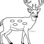Cartoon Deer Spotted Deer Coloring Page