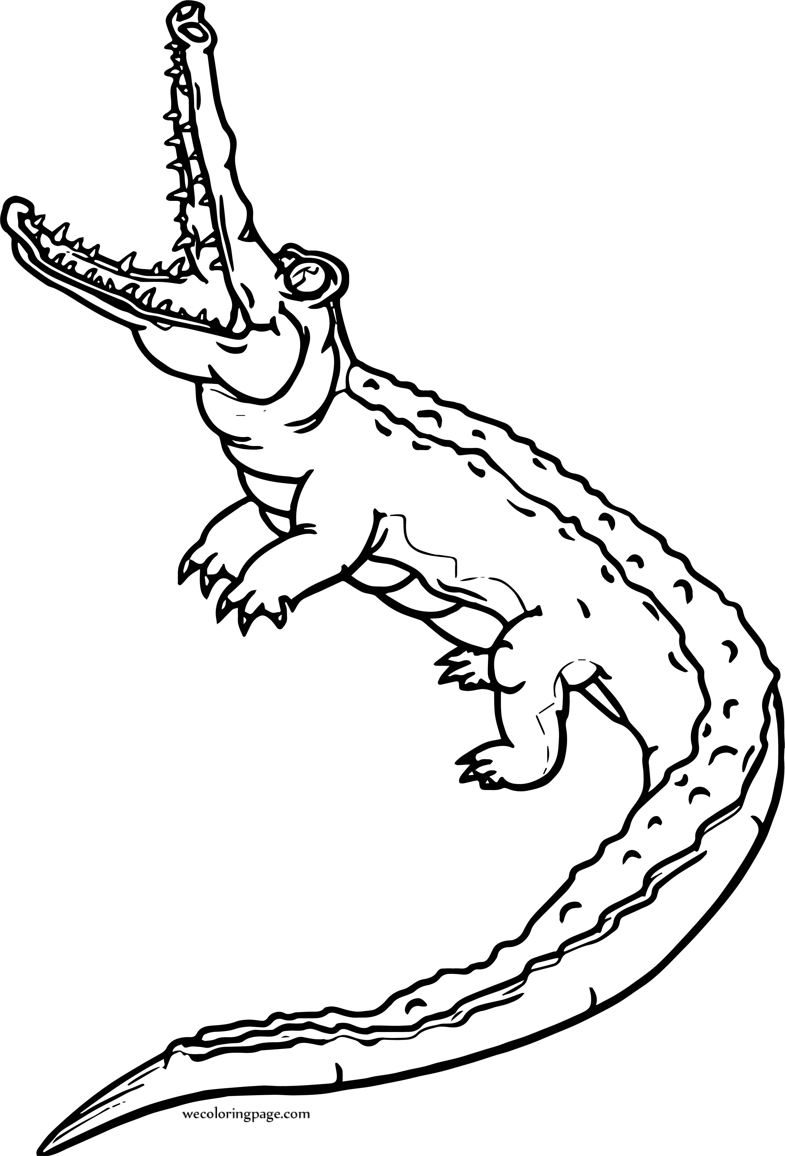 Crocodile Alligator Coloring Page | Wecoloringpage