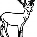 Deer Hi Coloring Page