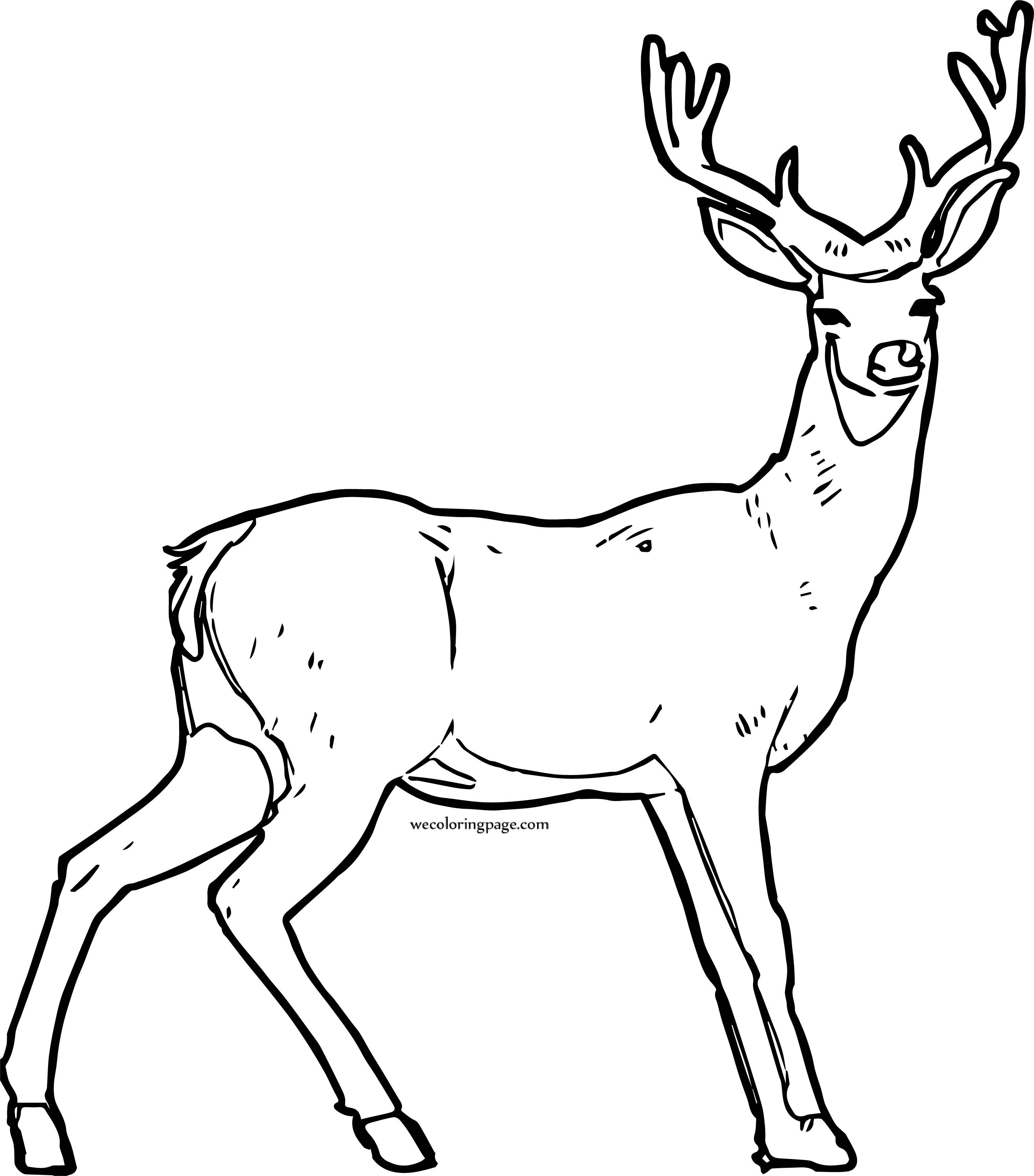 Deer Looking Coloring Page