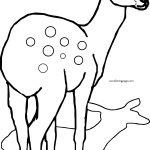 Deer Shadow Coloring Page