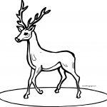 Deer Walking Coloring Page
