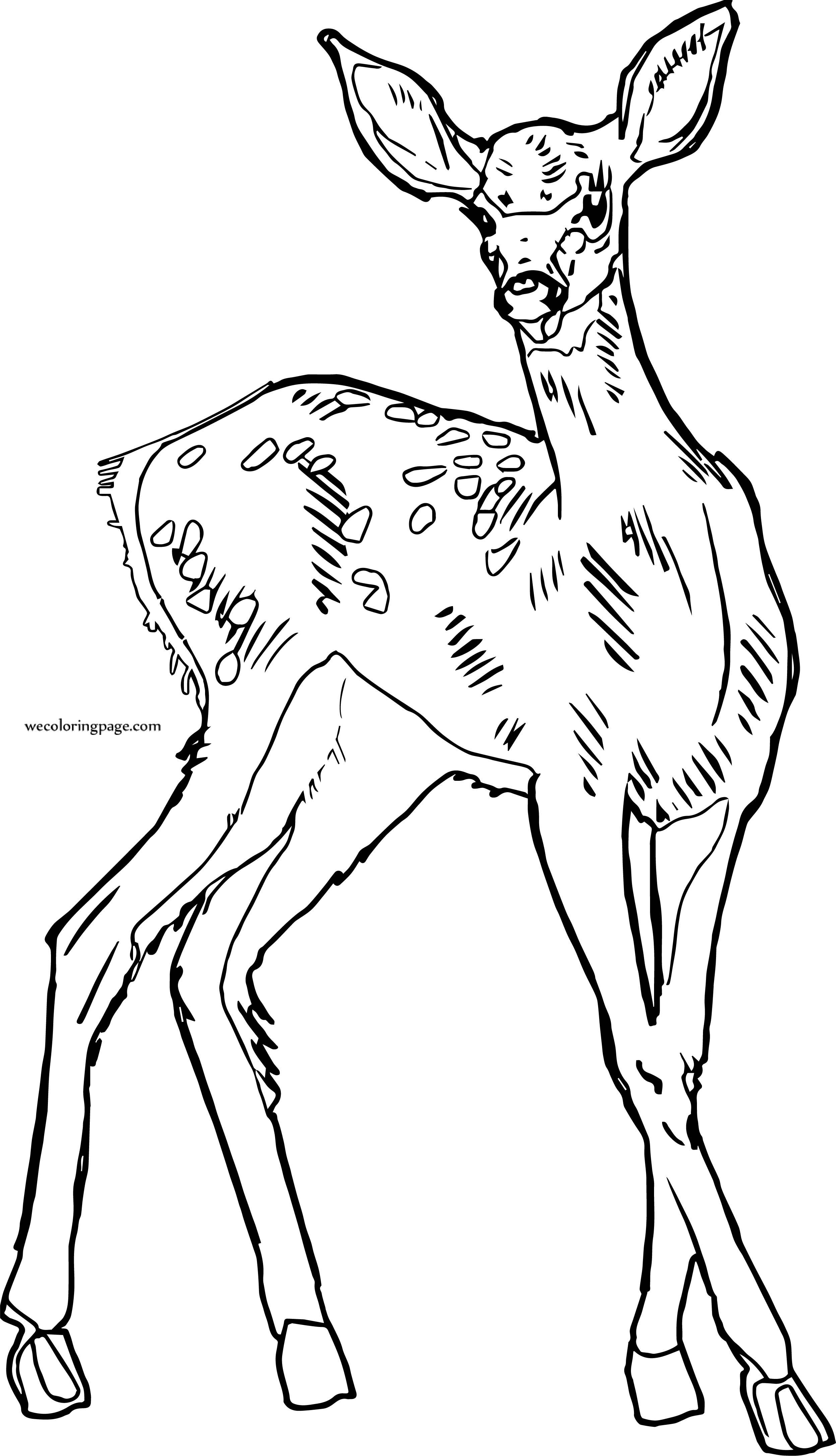 Girl Deer Free Image Coloring Page
