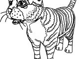Realistic Cat Coloring Page
