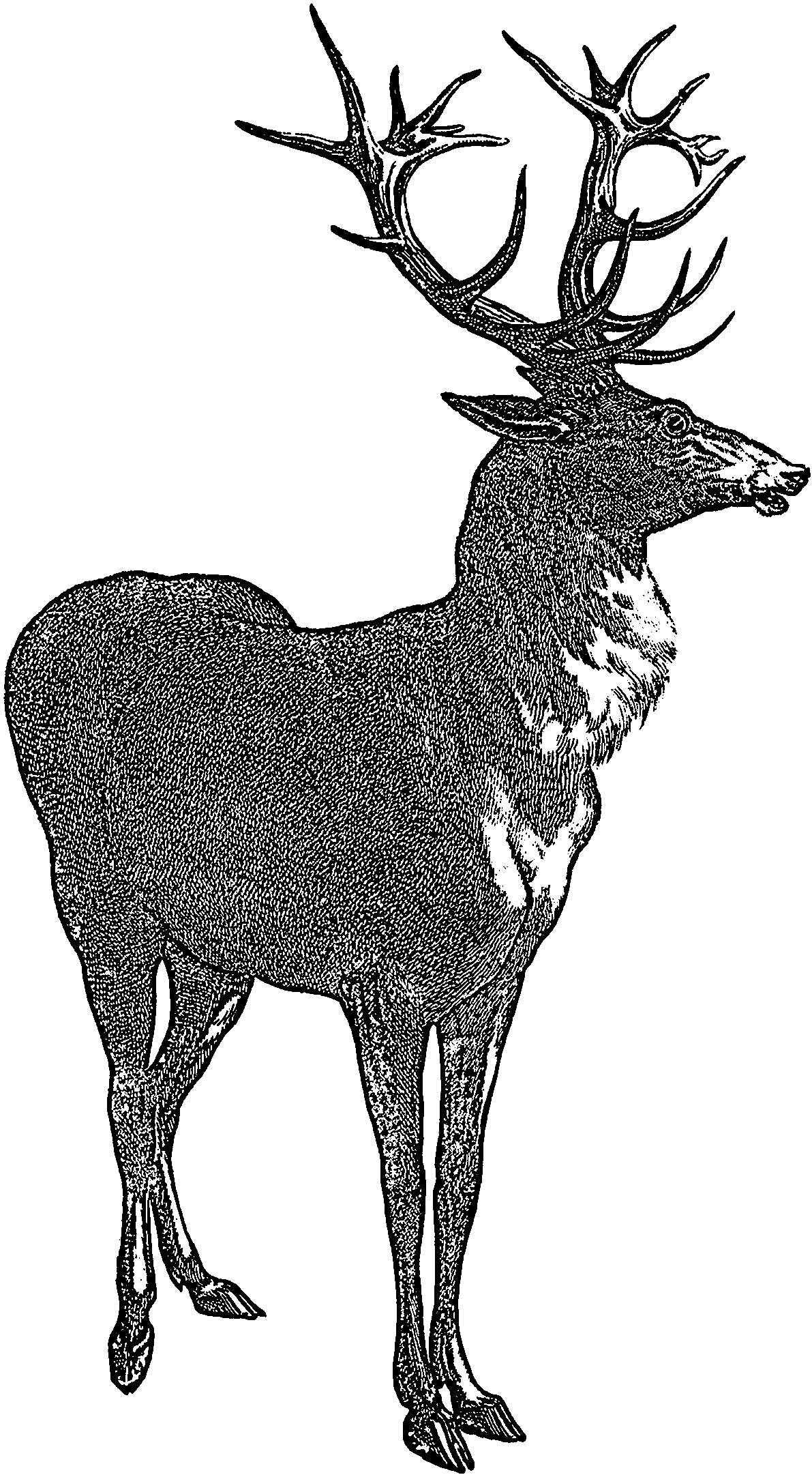 Red Deer Stag Picture Graphics Fairy Coloring Page