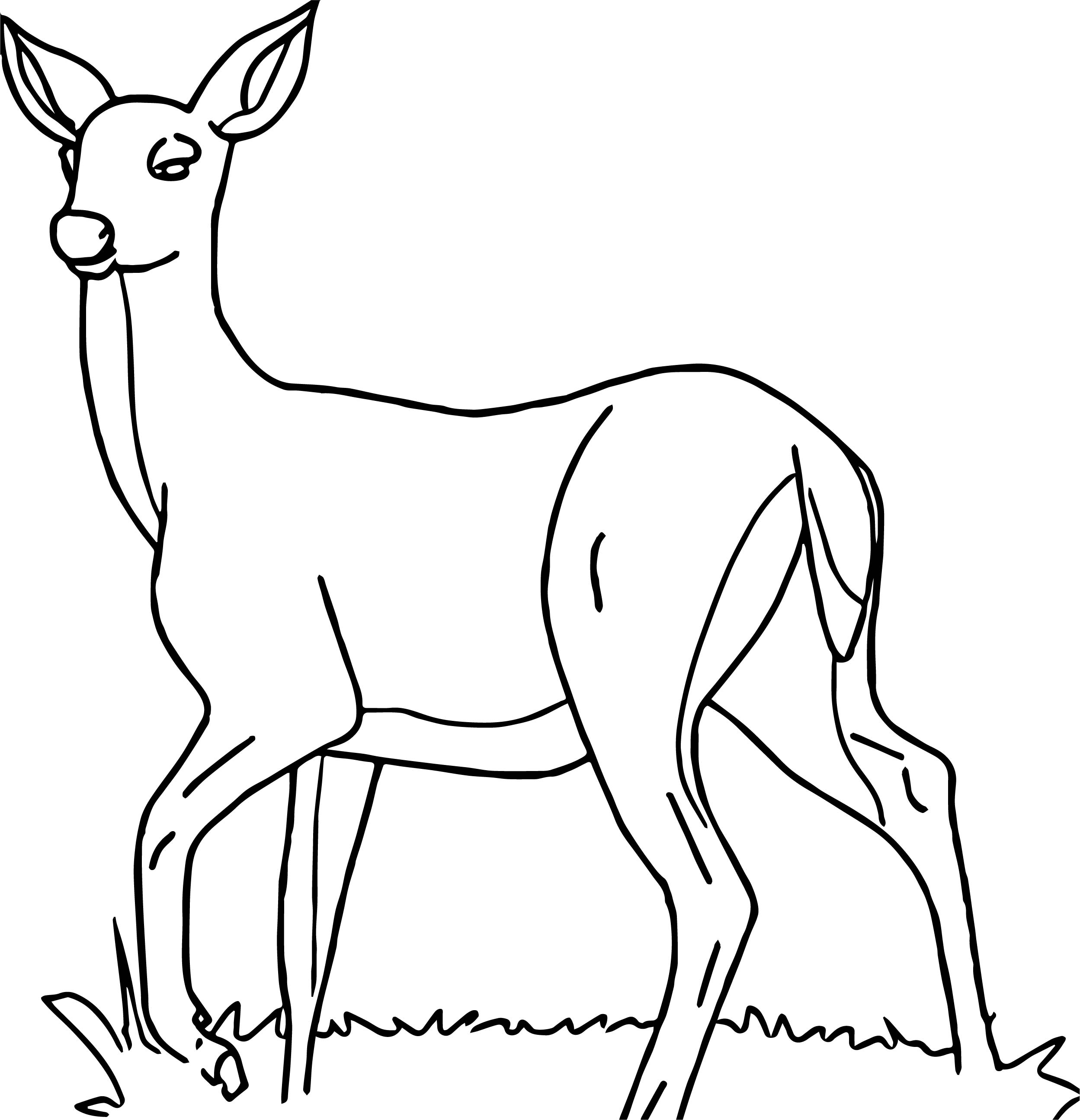 Search Results For Deer Pictures Coloring Page