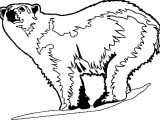 Such Bear Coloring Page