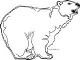 Why Bear Coloring Page For Girls
