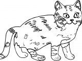 Come Cat Coloring Page