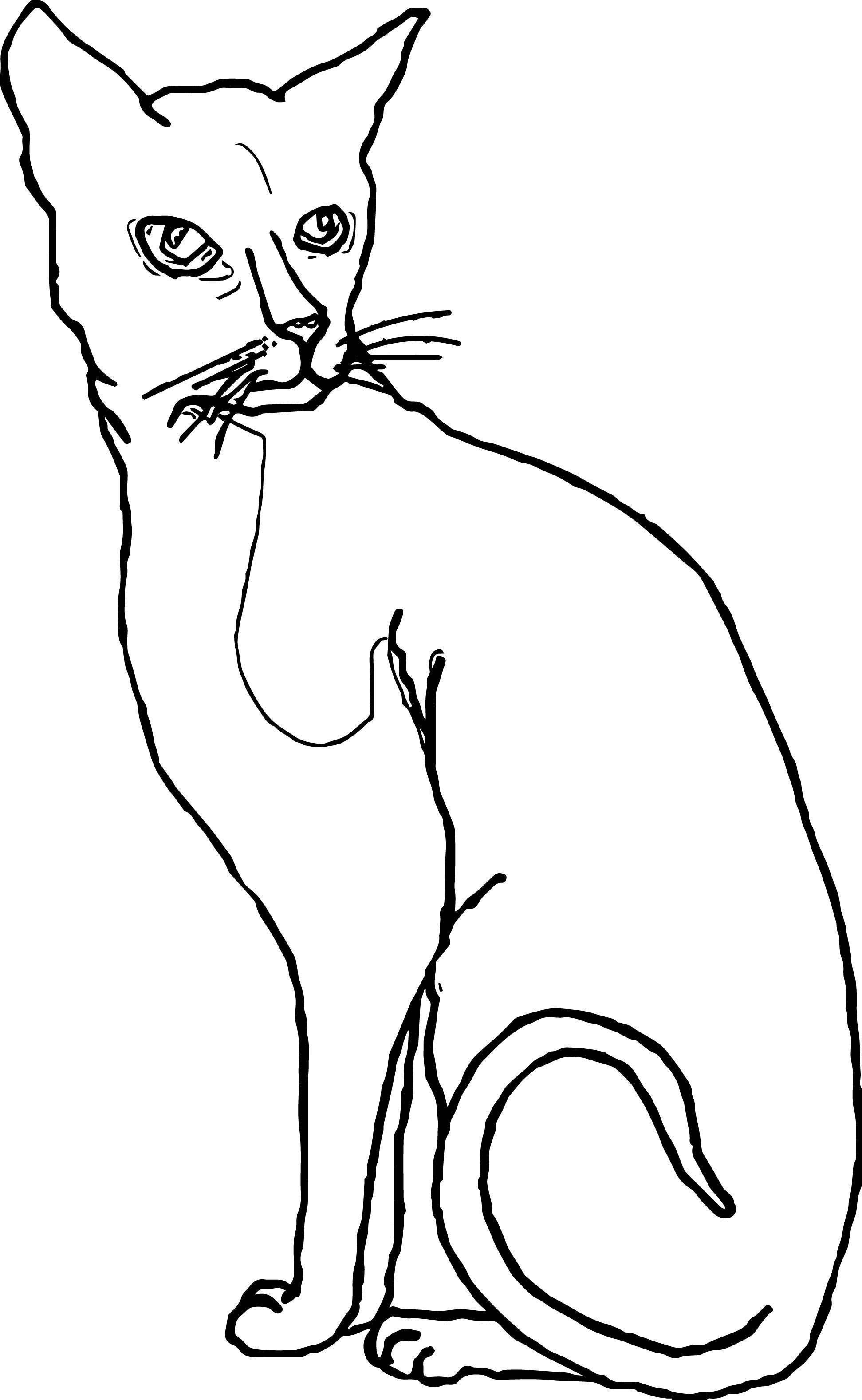 Even Cat Coloring Page