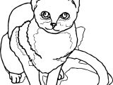First Cat Coloring Page