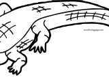 Home Crocodile Alligator Coloring Page