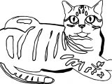 Let Cat Coloring Page