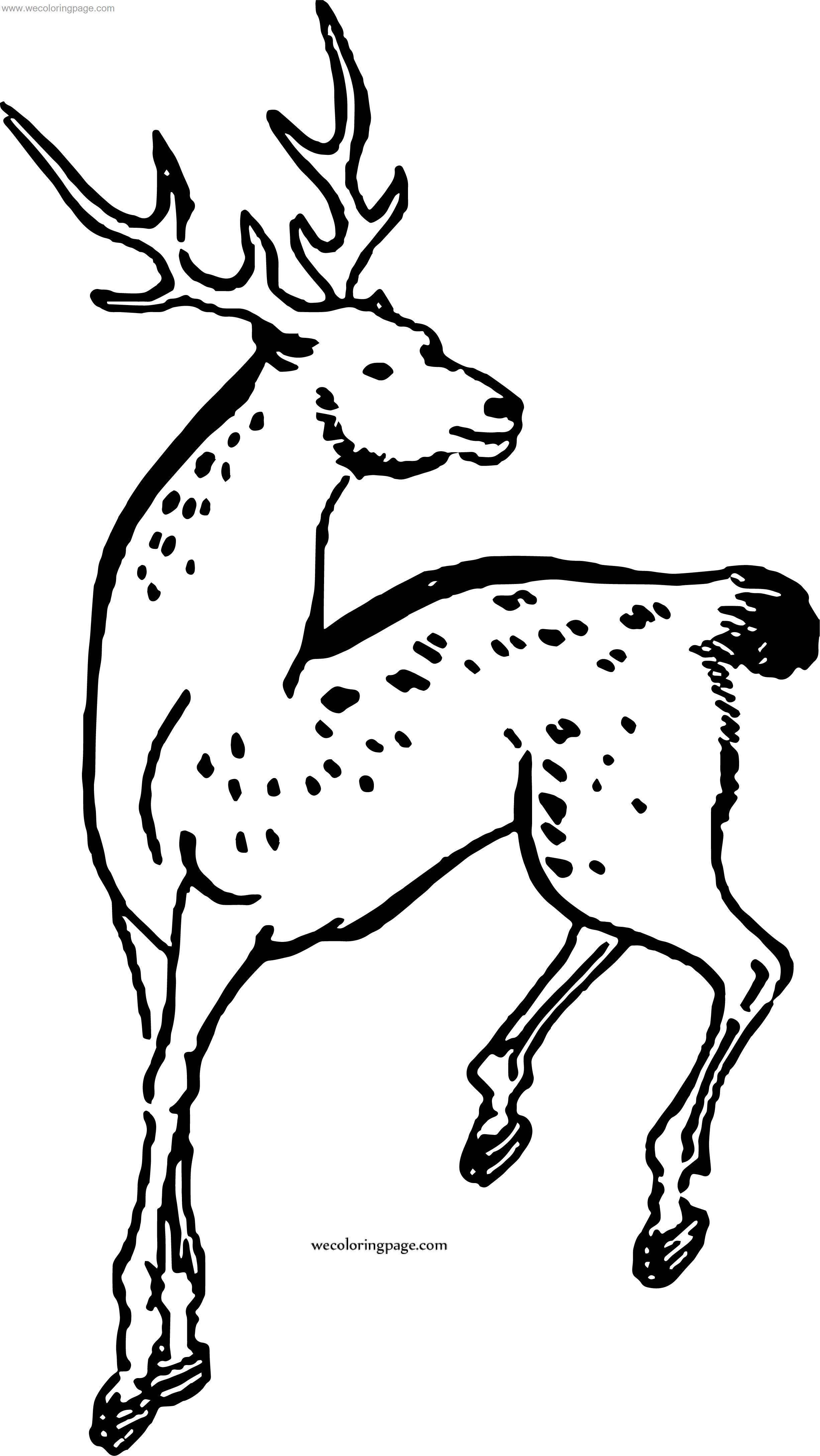 Offer Spotted Deer Coloring Page