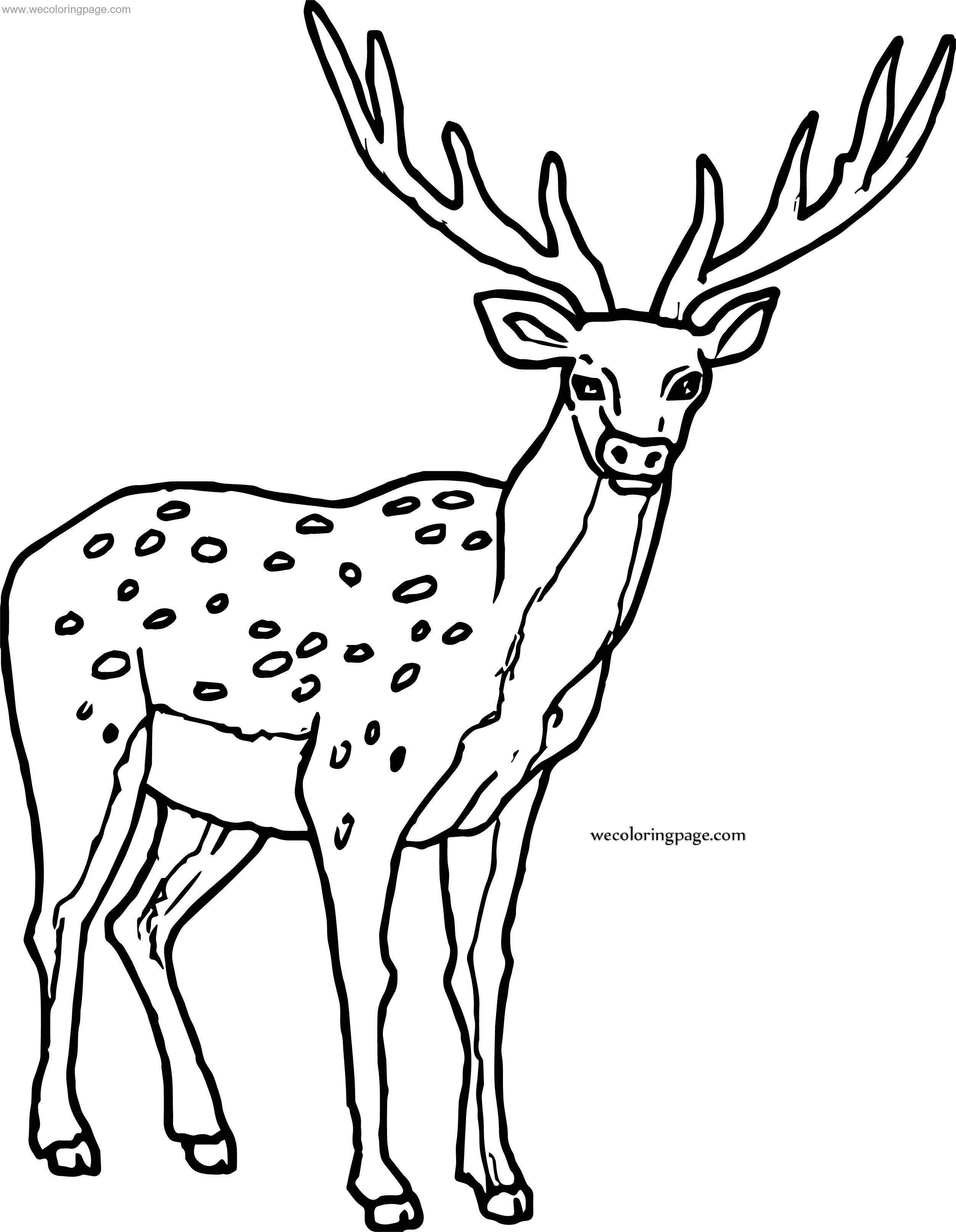 Proper Spotted Deer Coloring Page