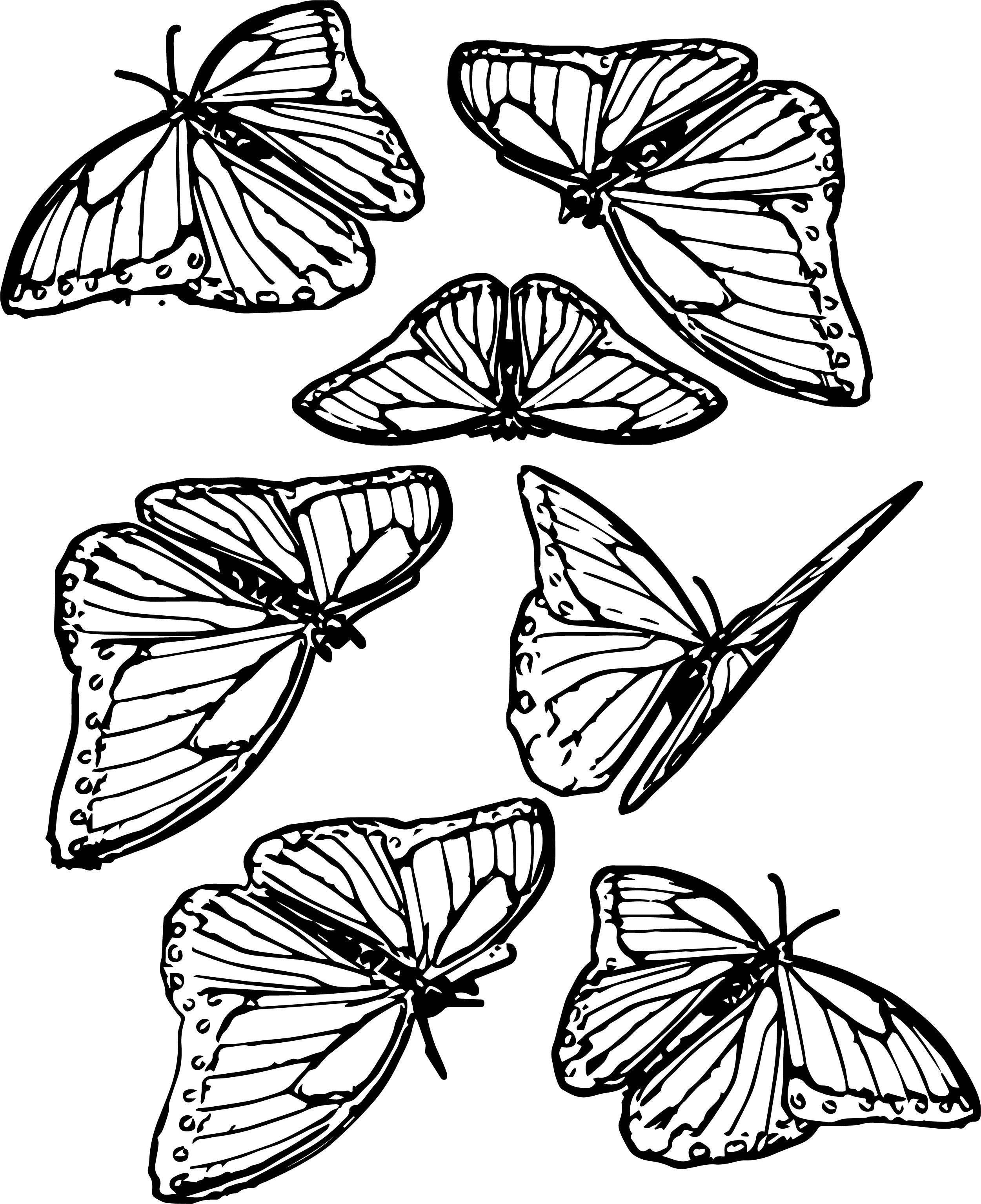 Seven Butterfly Coloring Page