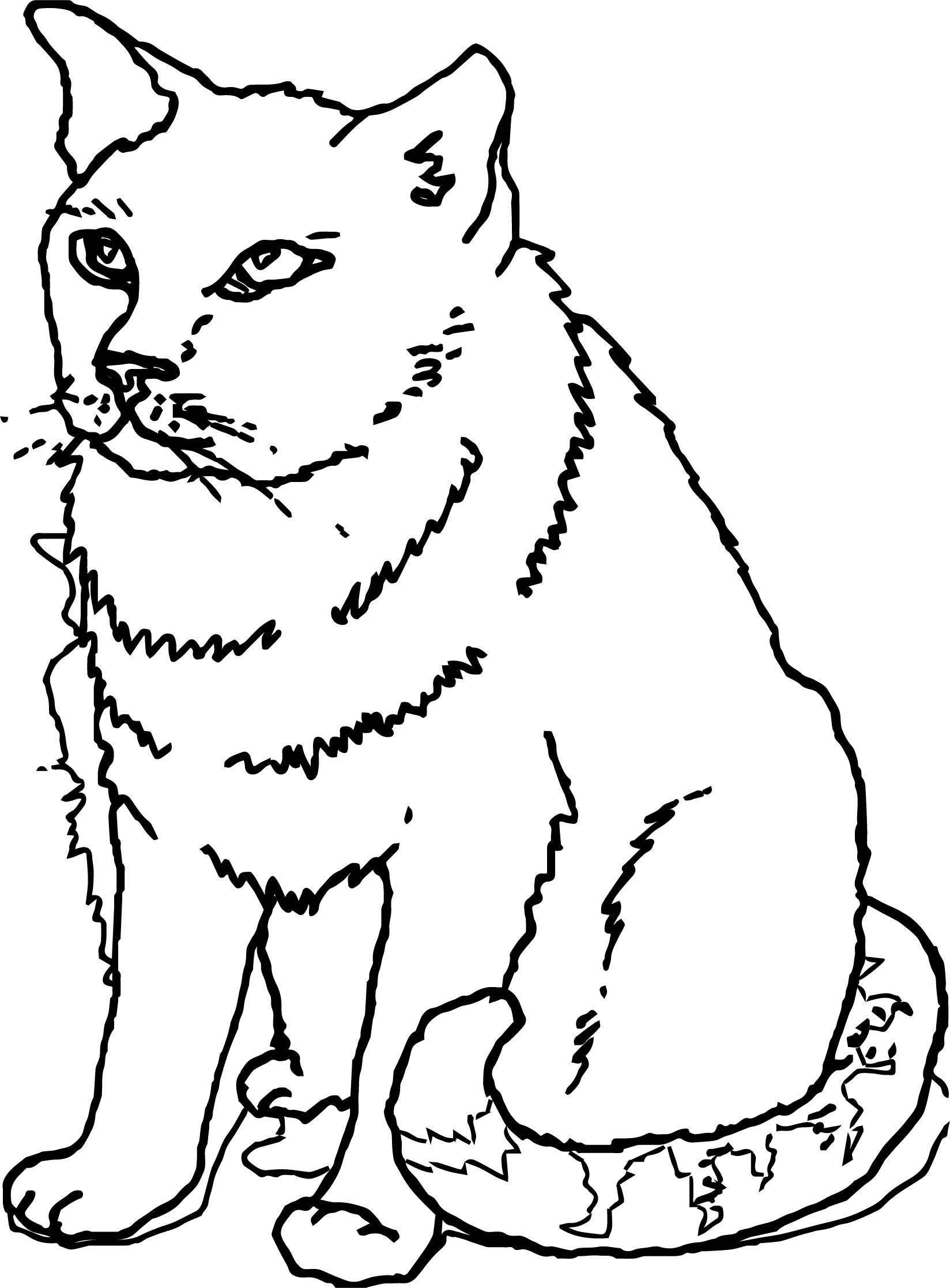 Some Cat Coloring Page