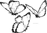 Three Butterfly Coloring Page Wecoloringpage.com Format