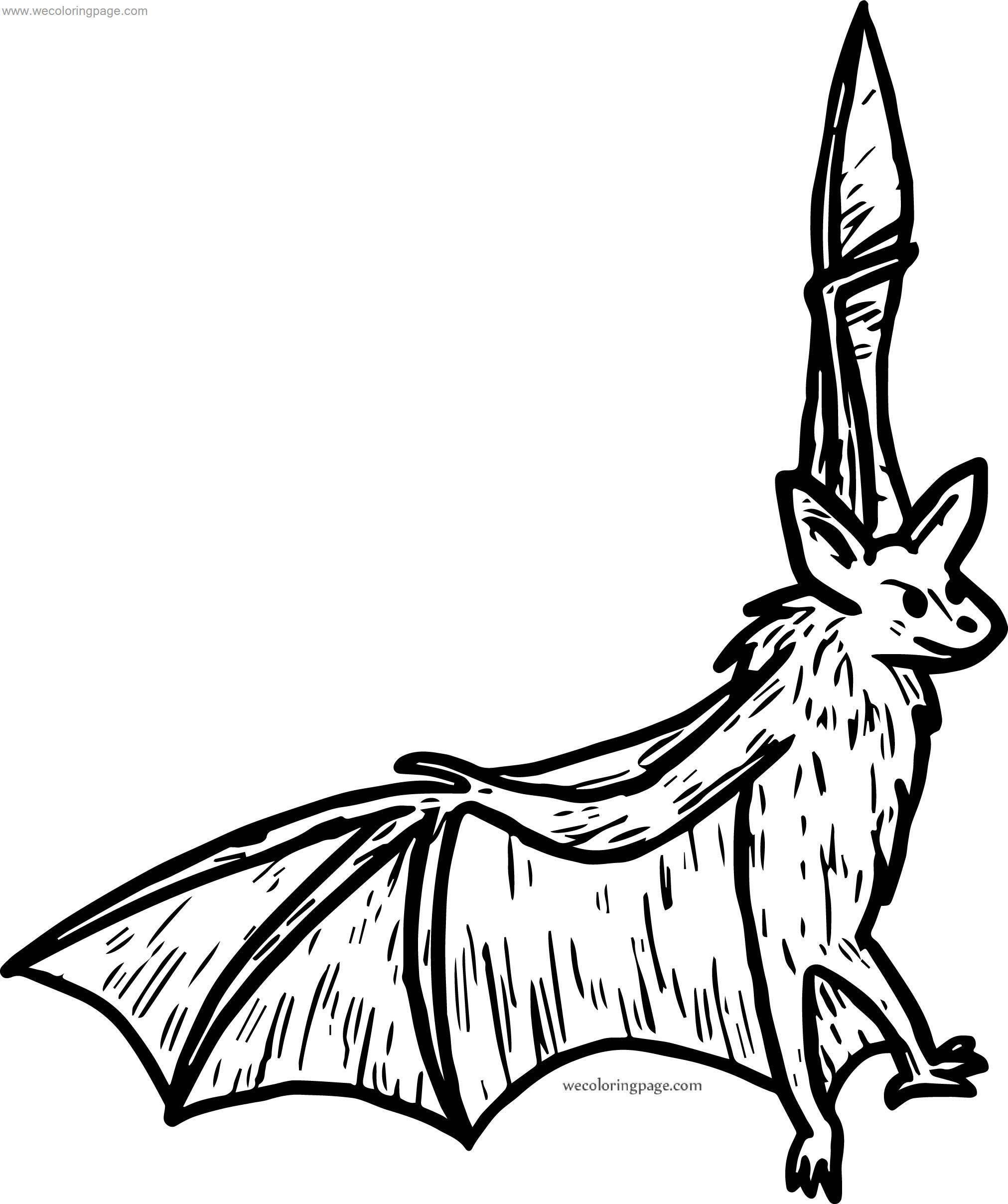 What Bat Coloring Page