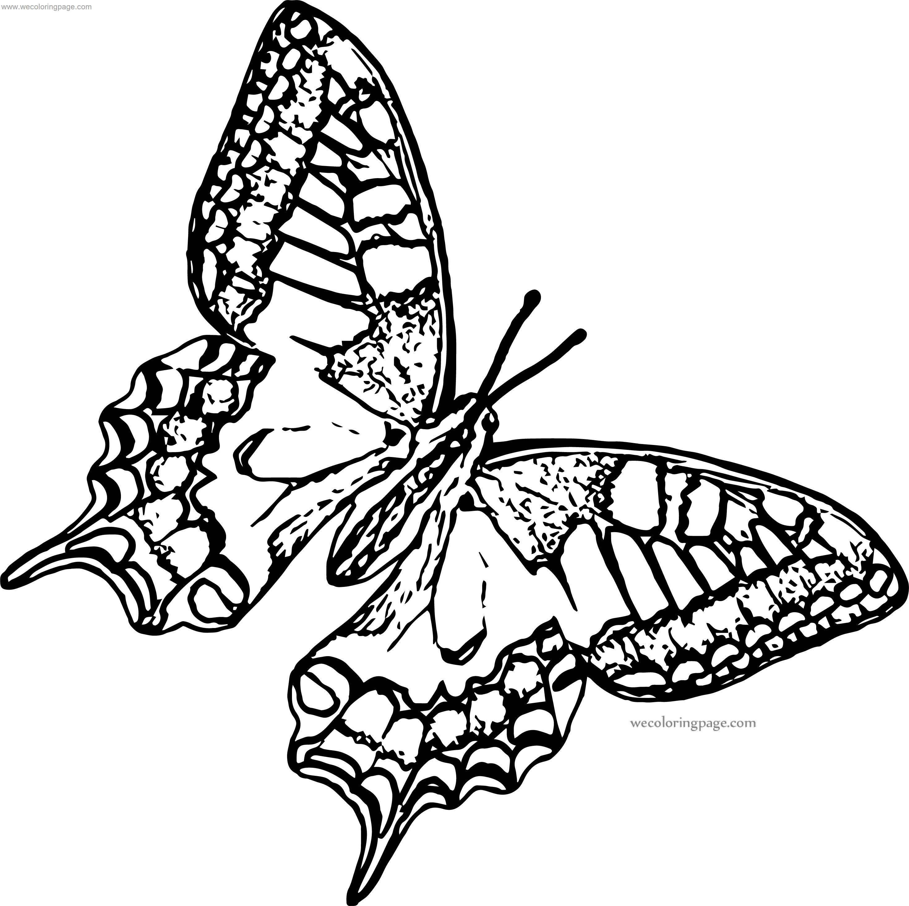 Butterfly Coloring Page Format