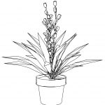 Houseplant Flower Coloring Page