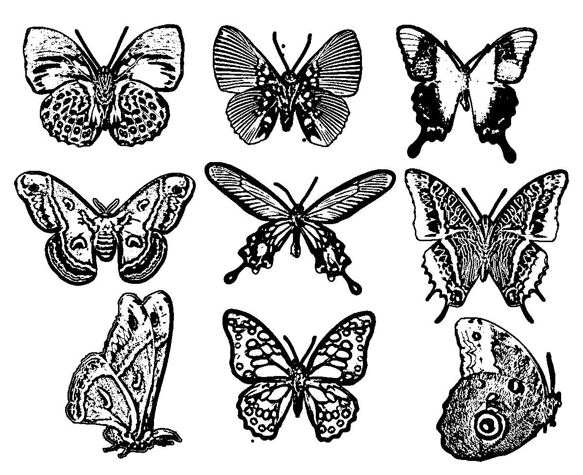 Mixed Series One Butterfly Coloring Page
