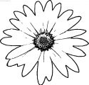 One Daisy Flower Coloring Page