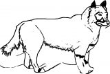 The Real Balto Coloring Page