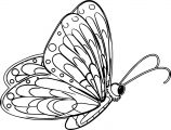 Transparent Blue Butterfly Outline Coloring Page