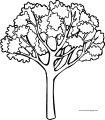 Big Fall Tree Coloring Page