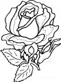 Big Rose Flower Coloring Page