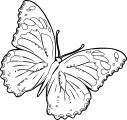Butterfly Coloring Page 02