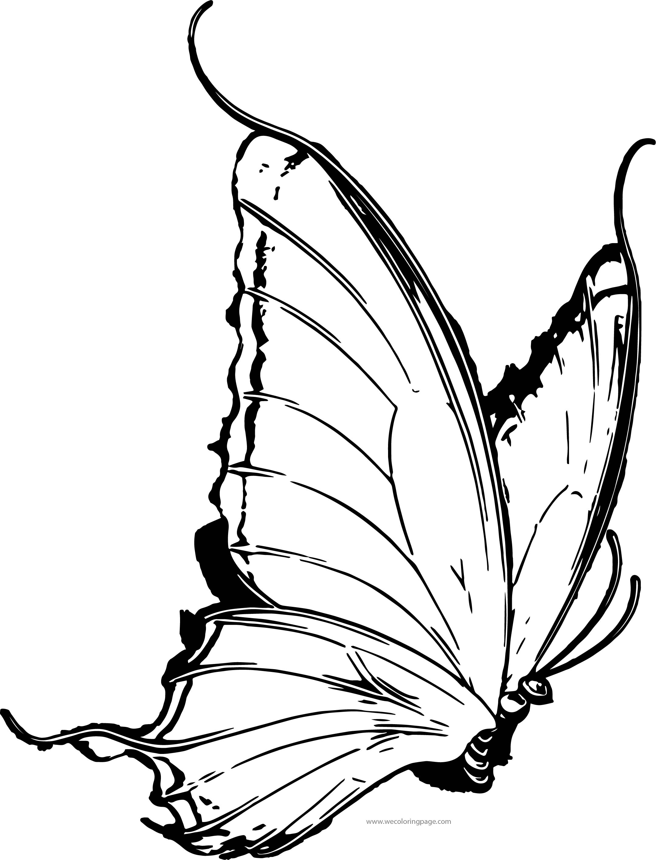 Butterfly Coloring Page Wecoloringpage 104