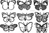 Butterfly Coloring Page Wecoloringpage 109