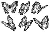 Butterfly Coloring Page Wecoloringpage 111