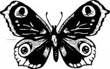 Butterfly Coloring Page Wecoloringpage 116