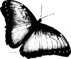 Butterfly Coloring Page Wecoloringpage 121