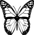 Butterfly Coloring Page Wecoloringpage 125