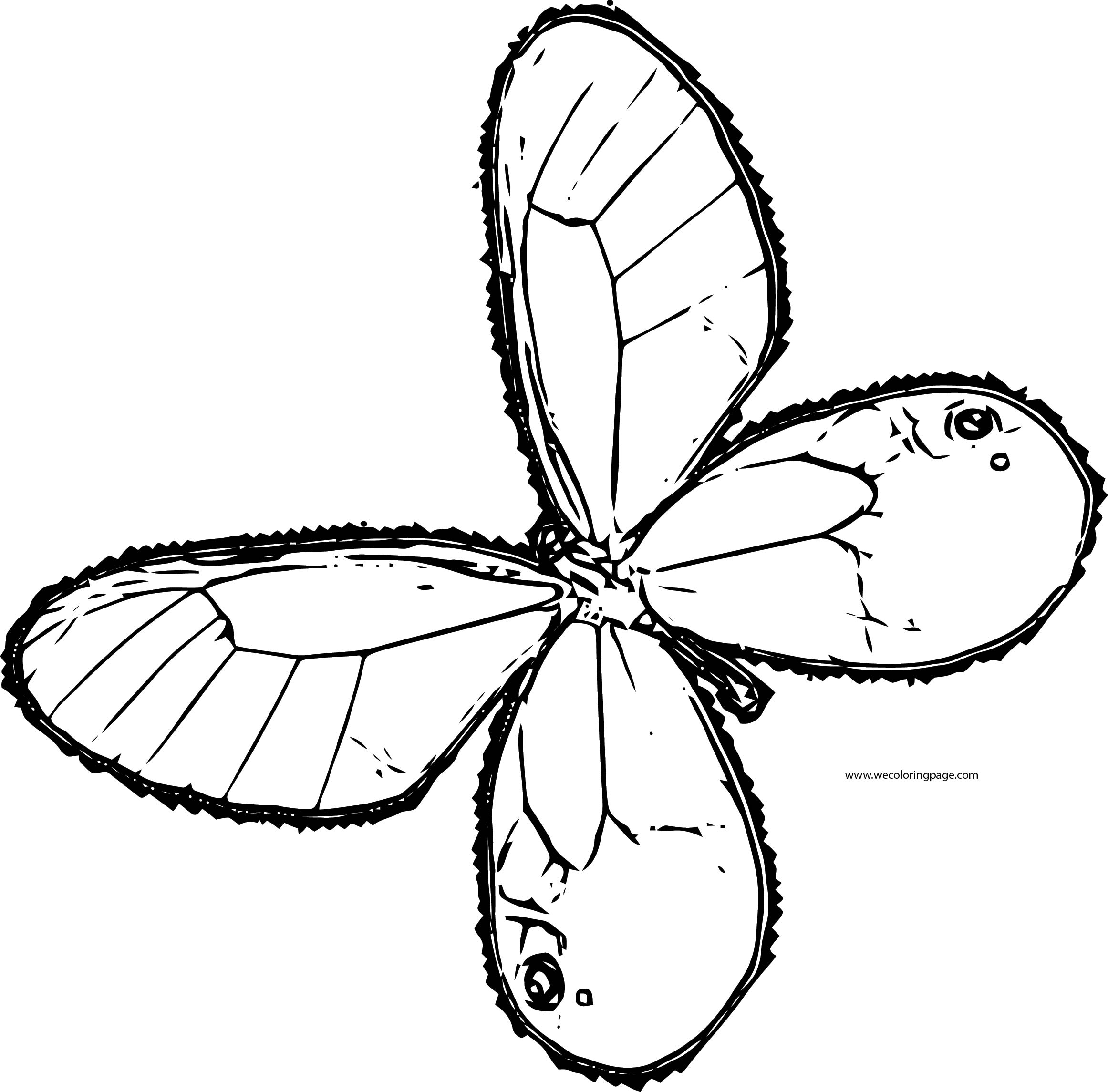 Butterfly Coloring Page Wecoloringpage 126