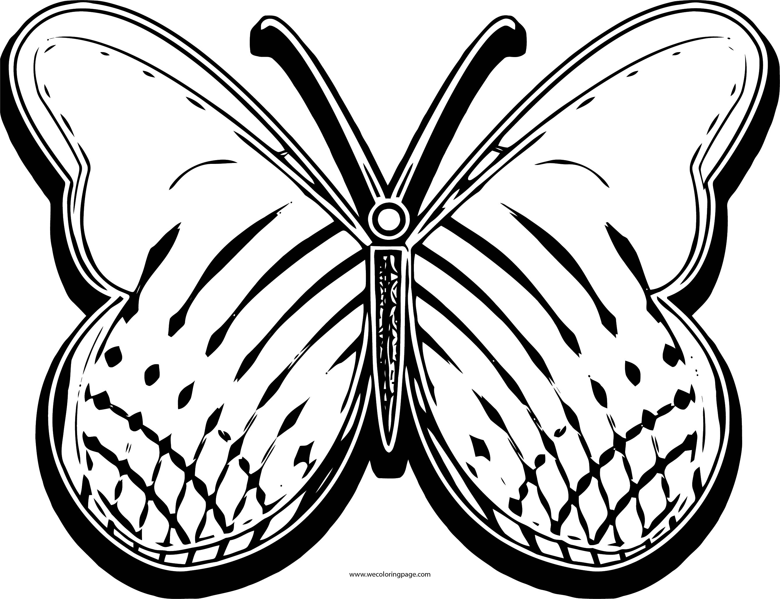 Butterfly Coloring Page Wecoloringpage 127